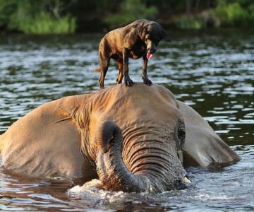 Un elefant si un caine - cei mai buni prieteni