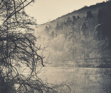 Povesti din paduri parasite, de Kaja Sopek