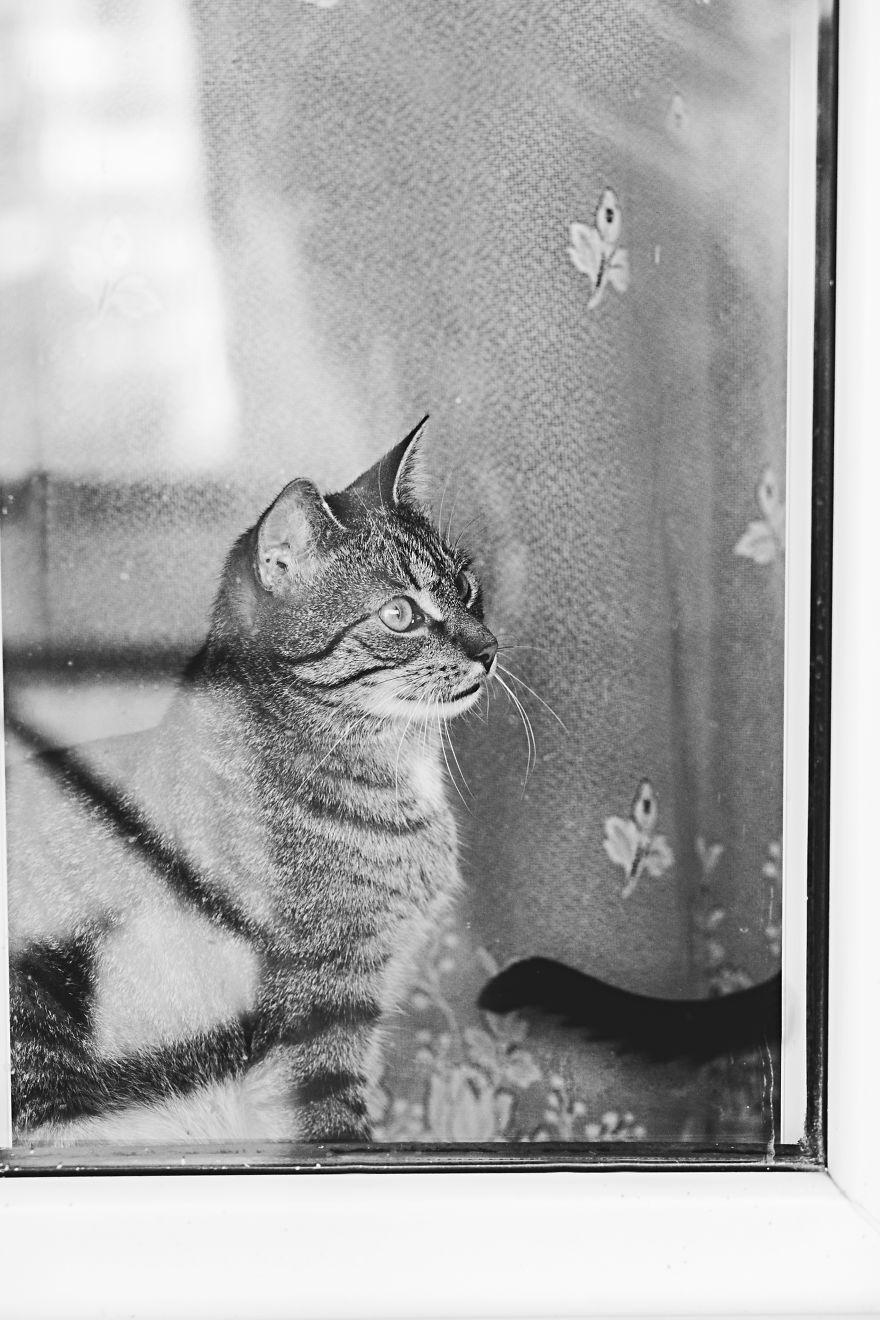 Pisici la fereastra, in poze alb-negru - Poza 6