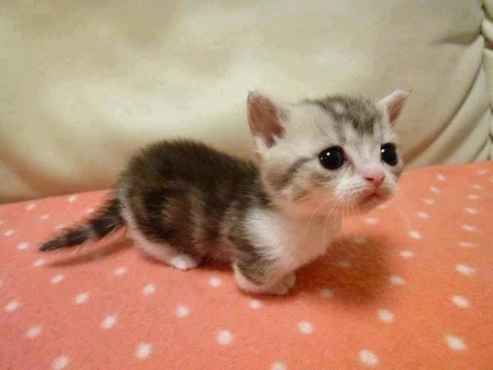 Cele mai dragute pisici din lume, in poze adorabile - Poza 11