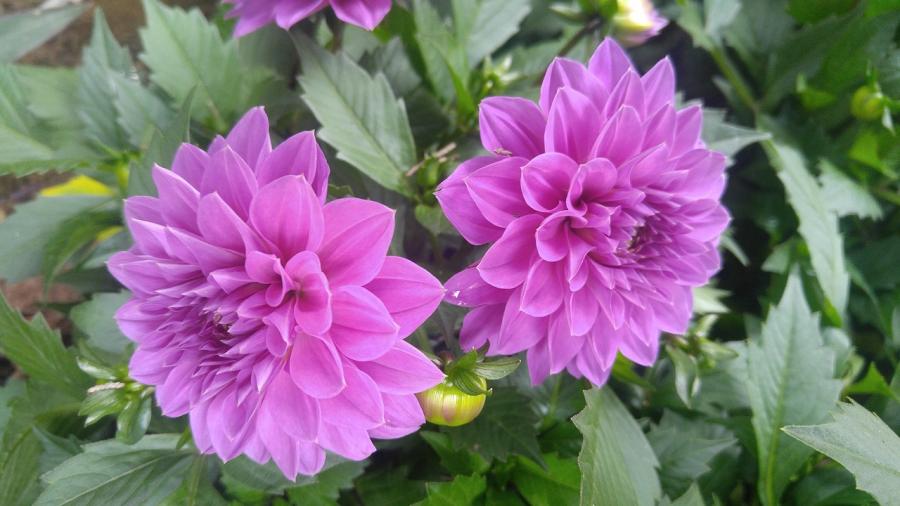 Cele mai frumoase flori din lume, intr-un pictorial de exceptie - Poza 16