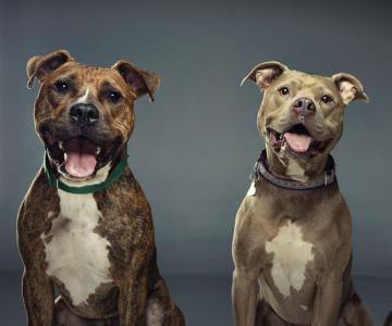 Nu exista rase agresive de caini - fotografii