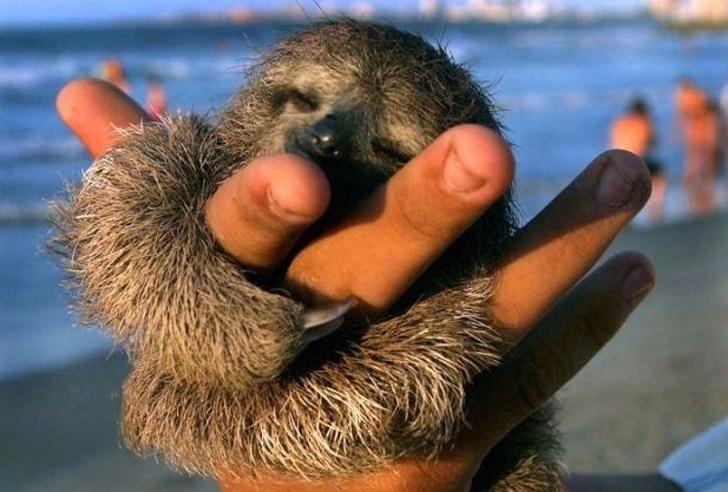 Cele mai simpatice animale lenese, in poze adorabile - Poza 1