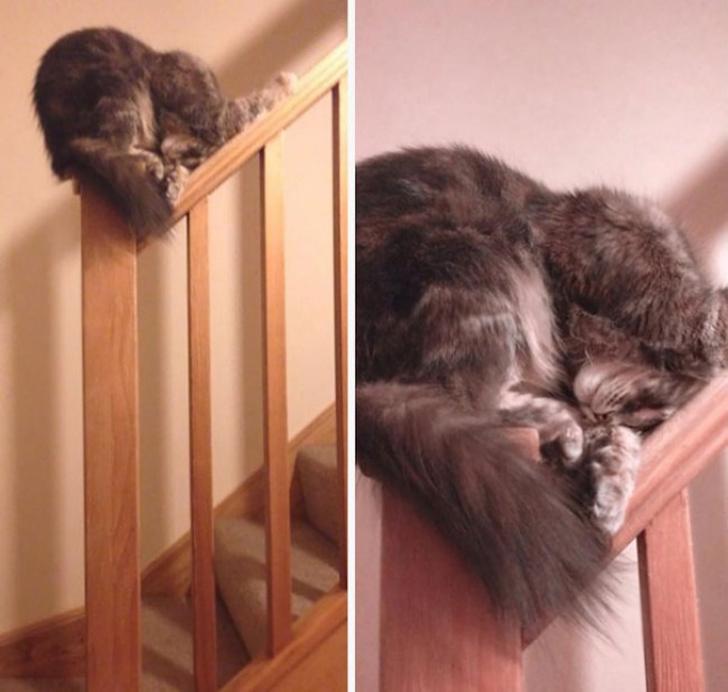Pisicile chiar au simtul umorului. Avem dovada! - Poza 19
