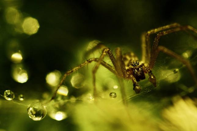 Natura la control, in 40 de poze - Poza 37