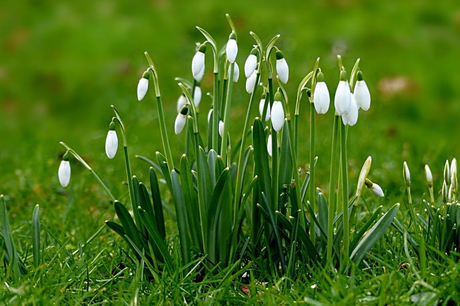 Cele mai frumoase flori din lume, intr-un pictorial de exceptie - Poza 7
