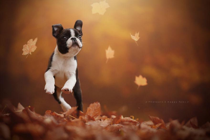 Portrete autumnale de suflet, de Anne Geier - Poza 2