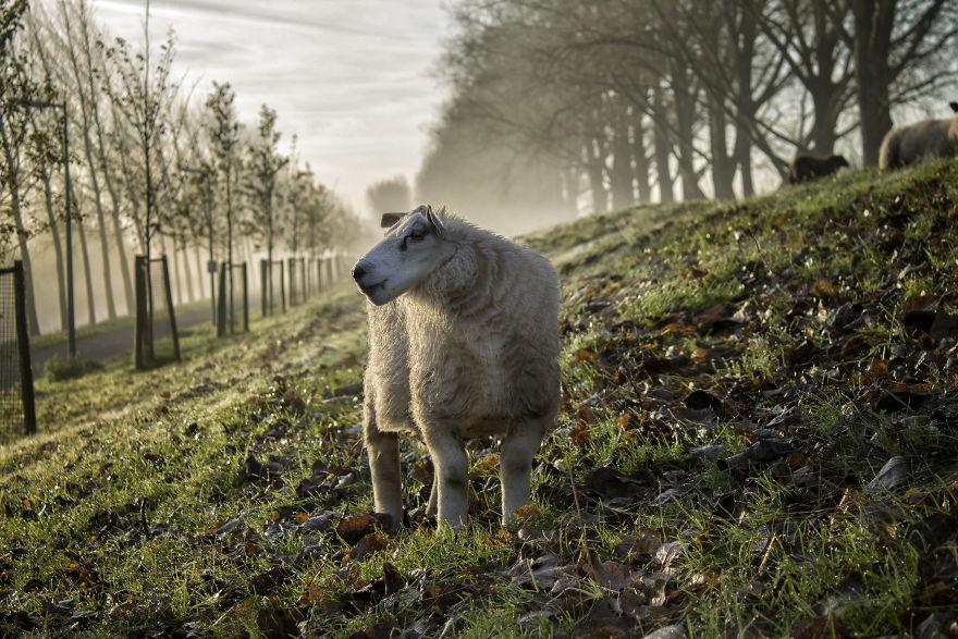 Animale colturoase, de Aditya - Poza 18