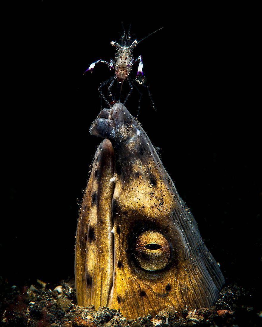 Fotografii superbe din uimitoarea lume subacvatica - Poza 13