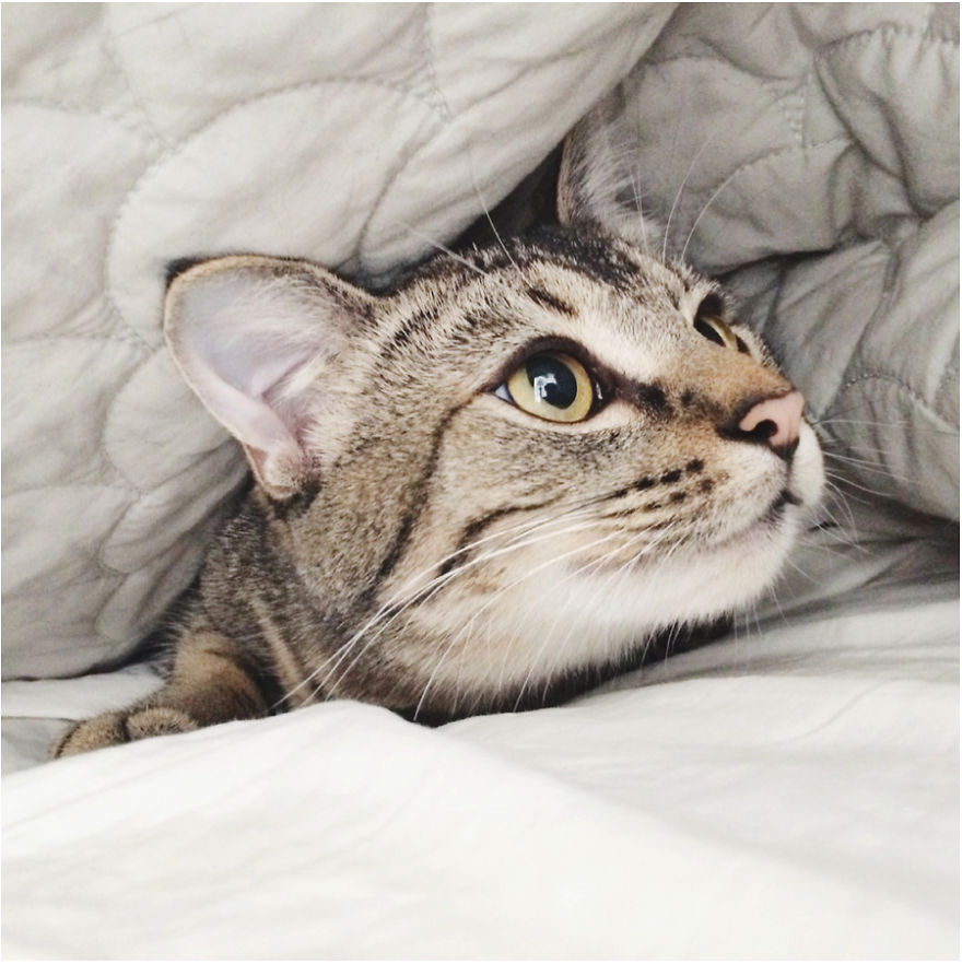 Cele mai frumoase poze cu pisici - Poza 32