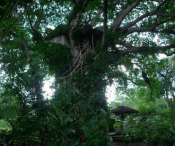 Inapoi in copilarie: 10 Casute in copaci ca in povesti