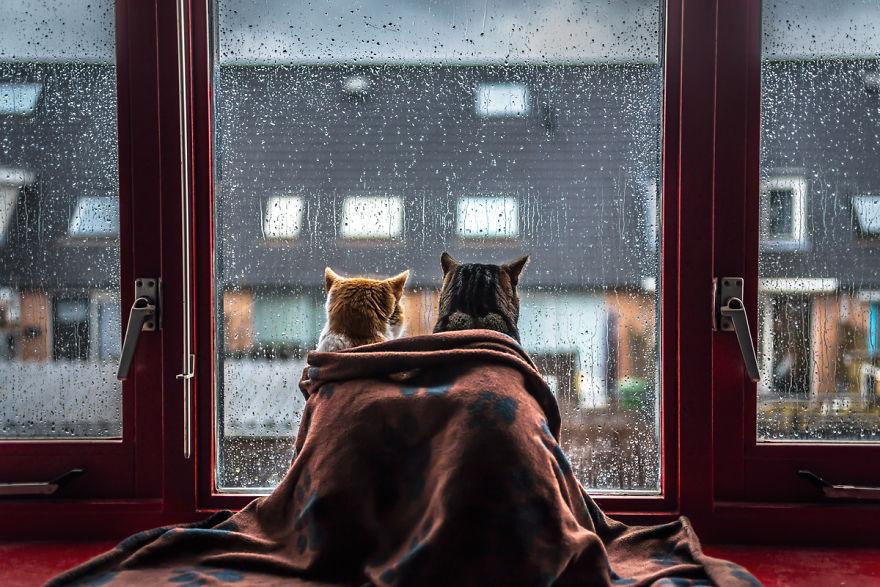 Pisicile care adora ploaia - Poza 7
