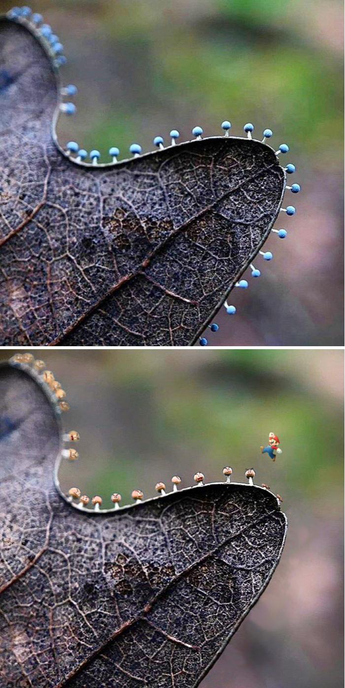 Cele mai amuzante poze prelucrate in Photoshop - Poza 3