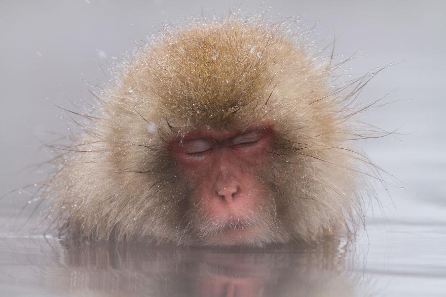 Expresiile impresionante ale maimutelor de zapada - Poza 12