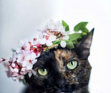 Plimabrea pisicii multicolore prin patru anotimpuri