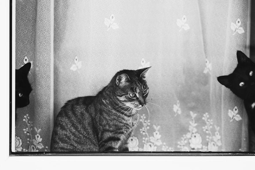 Pisici la fereastra, in poze alb-negru - Poza 20