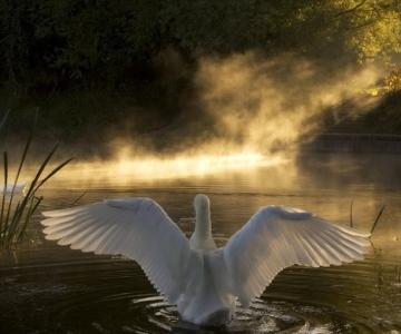 Momente unice: 34 de fotografii superbe