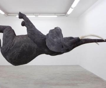 Elefantul plutitor de Daniel Firman
