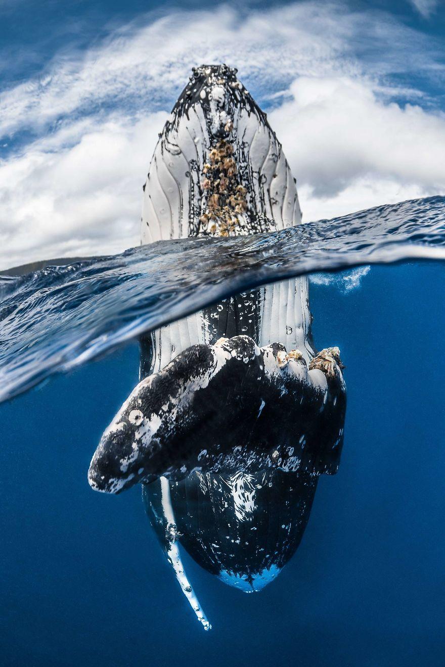 Fotografii superbe din uimitoarea lume subacvatica - Poza 9