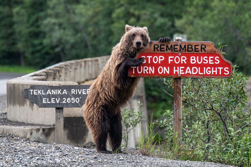 Comedy Wildlife Photography: Cele mai amuzante poze din salbaticie - Poza 9