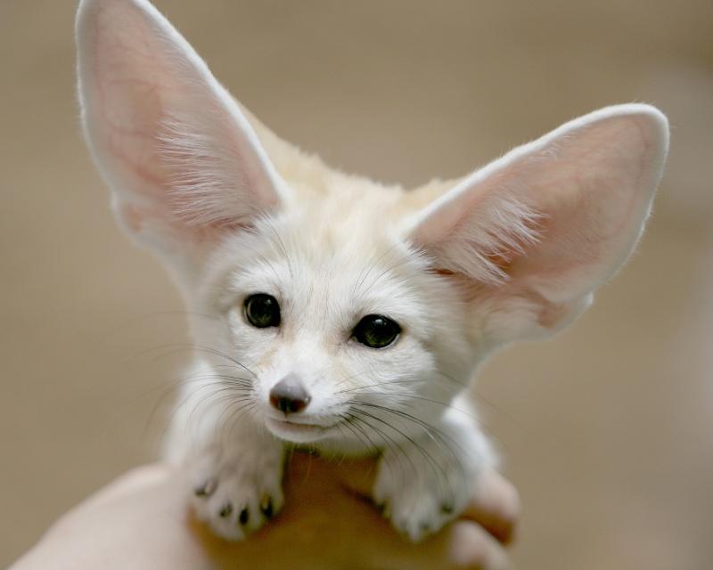 Cele mai dragute animale din lume, intr-un pictorial adorabil - Poza 11