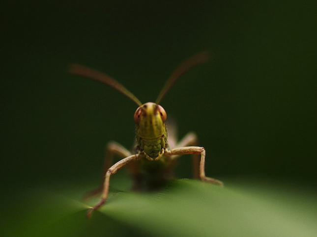 Natura la control, in 40 de poze - Poza 16