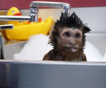 15 Animale simpatice care fac baie