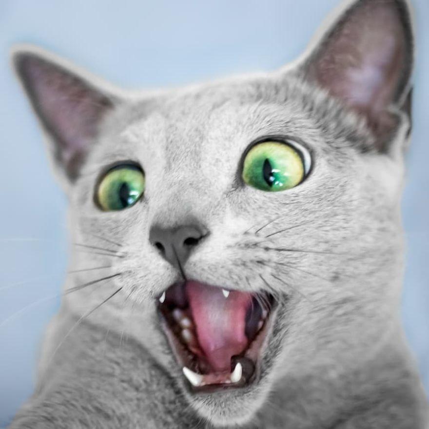 Pisicutele cu cei mai frumosi ochi din lume, in poze superbe - Poza 13