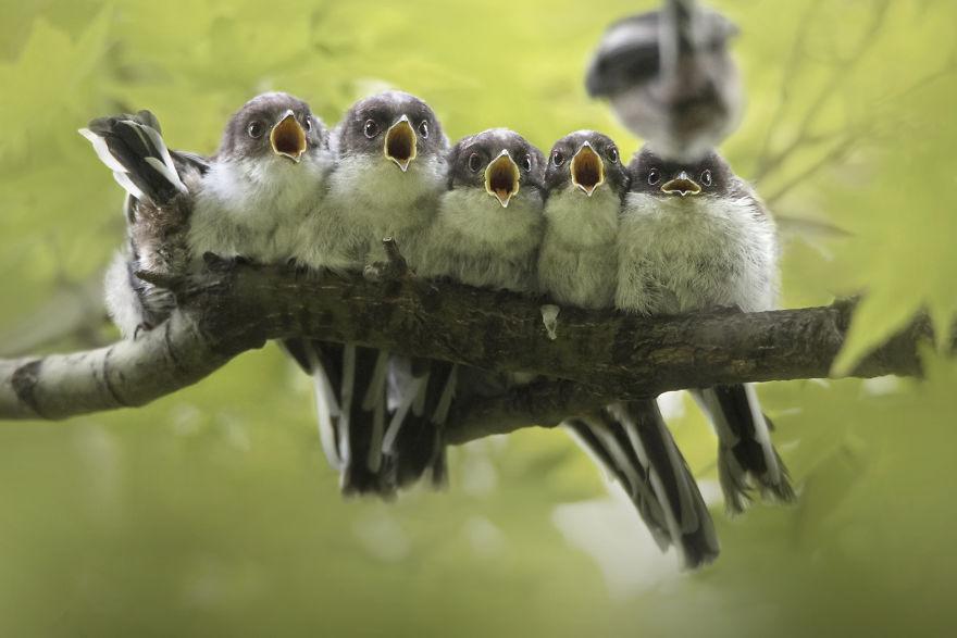 Cele mai bune fotografii cu si despre natura din 2019 - Poza 4