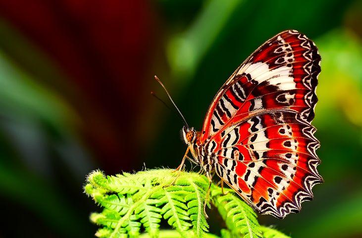 Cei mai frumosi fluturi din lume, in poze spectaculoase - Poza 19