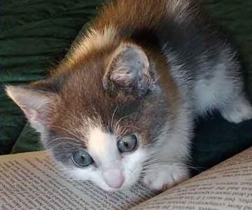 Caini si pisici la ora de lectura