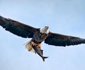 25 de poze cu natura: John Fan