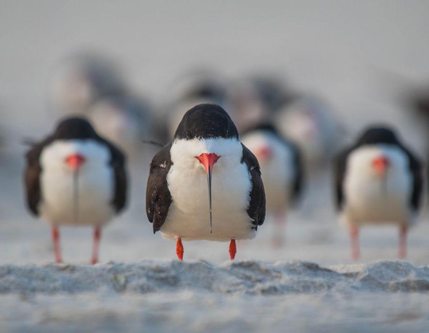 Comedy Wildlife Photography: Cele mai amuzante poze din salbaticie - Poza 7