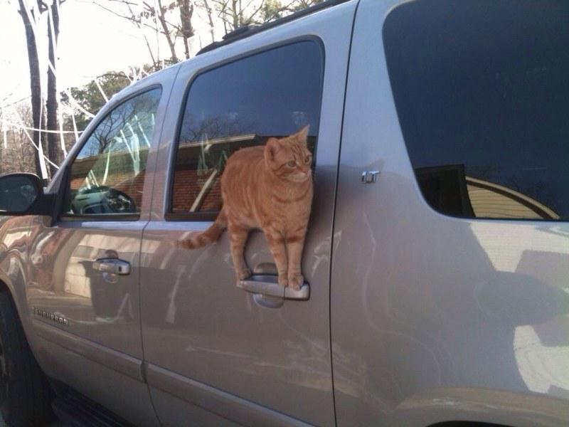Pisici poznase ascunse in fel de fel de locuri - Poza 9