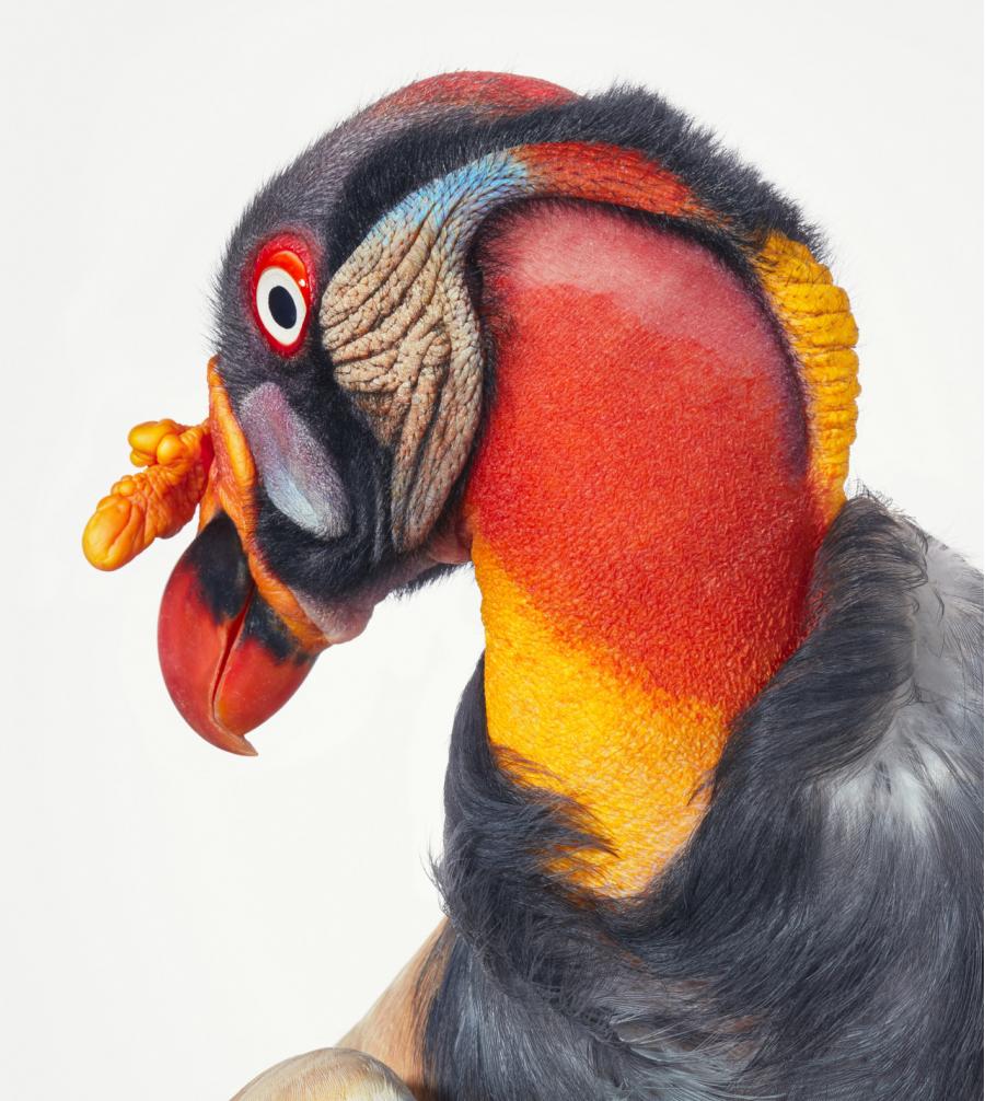 Frumusetea pasarilor rare, in poze fascinante - Poza 6