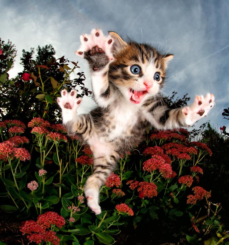 Pisicute adorabile surprinse in aer - Poza 2