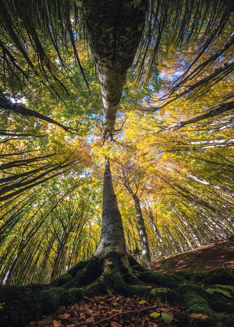 Splendoarea arborilor centenari, in urcusul lor spre cer - Poza 2