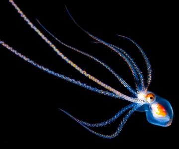 Fascinatia adancurilor: Animale marine fosforescente