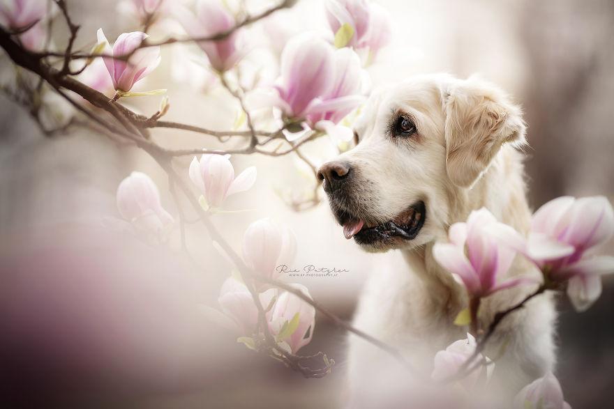 Bucuria sufletului frumos de caine, in poze superbe - Poza 12