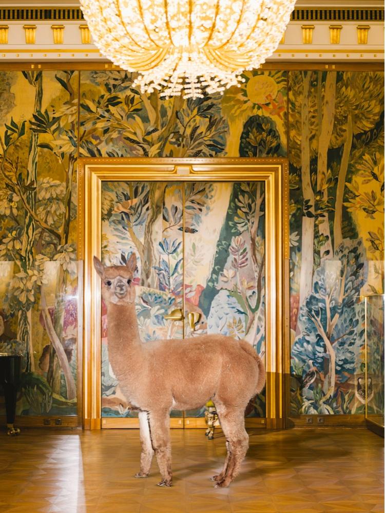 Cele mai zambarete animale din lume, in circumstante elegante - Poza 2