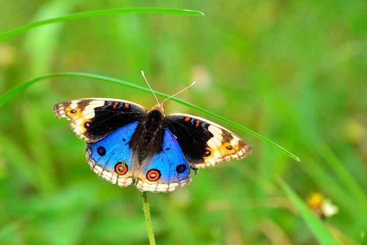 Cei mai frumosi fluturi din lume, in poze spectaculoase - Poza 21
