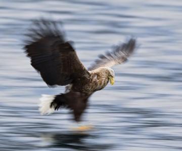 Natura in 28 de fotografii de Stian Holmen