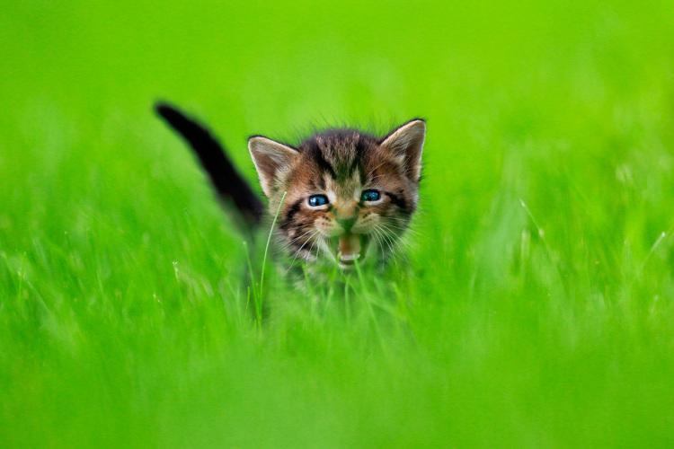 Pisicute adorabile surprinse in aer - Poza 7