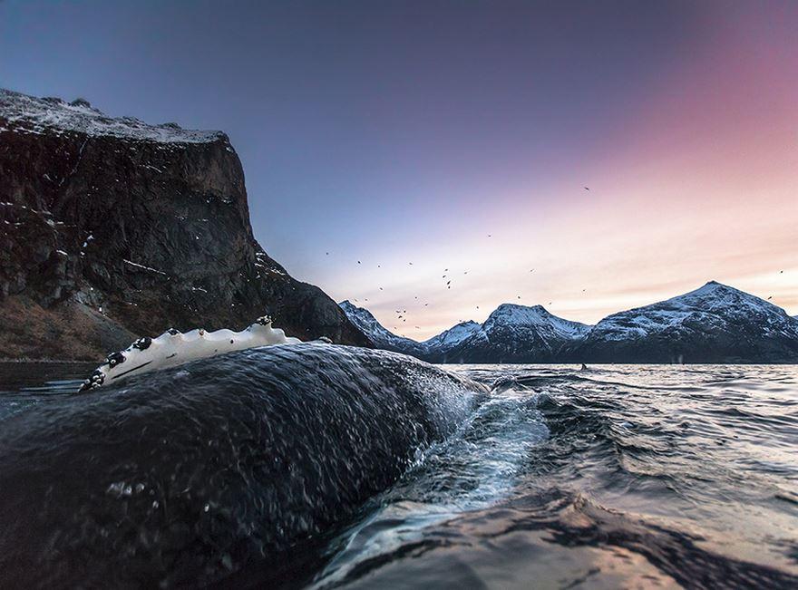 Balenele din Oceanul Inghetat, in poze superbe - Poza 7
