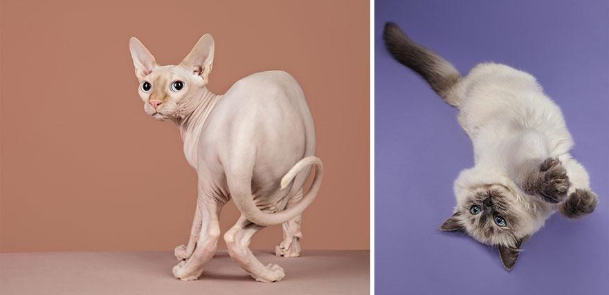 Cele mai frumoase pisici, intr-un pictorial atipic - Poza 7