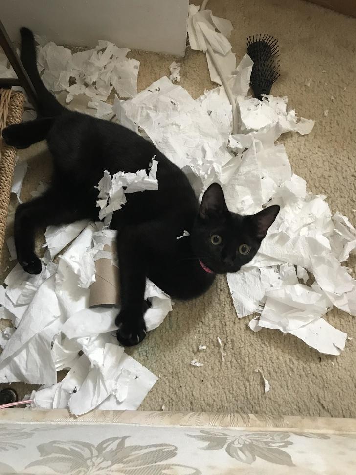 Pisici puse pe rele, in poze haioase - Poza 14