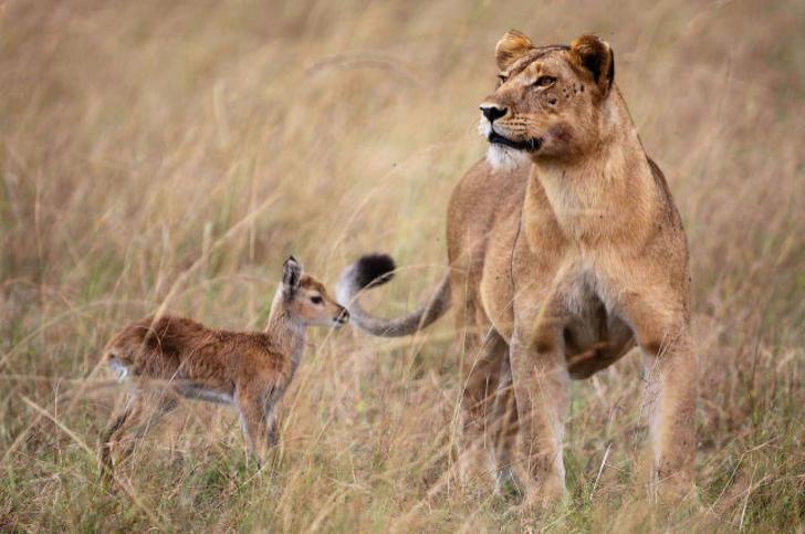 Cele mai prietenoase animale, in imagini induiosatoare - Poza 13