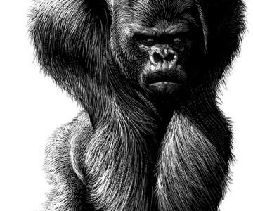 Portrete animalice, de Ricardo Martinez