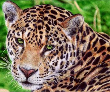Picturi cu pixul, de Samuel Silva