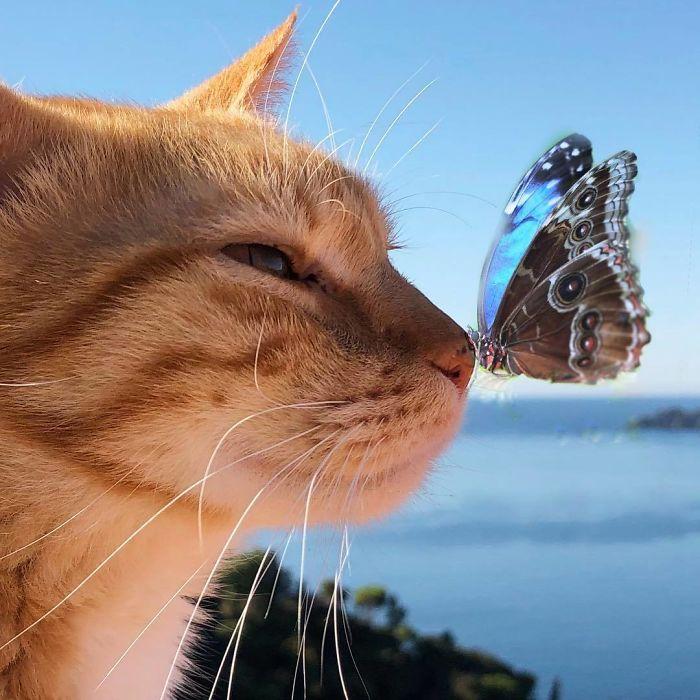 Viata de pisica, in poze adorabile - Poza 2